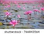 pink lotus pond scenery ...   Shutterstock . vector #766843564