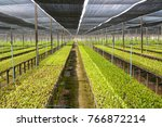 row of orchid plant in orchid...   Shutterstock . vector #766872214