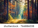 Autumn Forest Nature. Vivid...