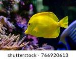 'bubbles' The Yellow Tang Fish...
