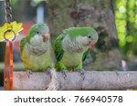 the monk parakeet  myiopsitta... | Shutterstock . vector #766940578