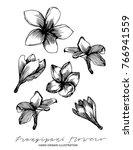 frangipani flowers hand drawn...   Shutterstock .eps vector #766941559