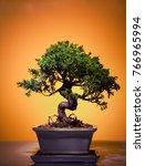 Bonsai Tree Jumper In Studio...