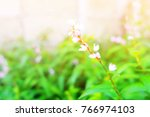 flower of thai herb for cooking. | Shutterstock . vector #766974103