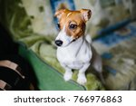 dog thinking and watching about ... | Shutterstock . vector #766976863
