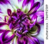 fine art detailed close up... | Shutterstock . vector #766992589