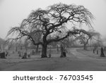 Very scary looking tree in a graveyard,  Taken on a foggy afternoon for scary atmosphere. - stock photo