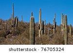 Arizona High Elevation...
