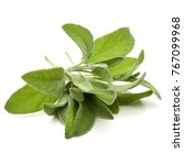 sage herb leaves  bouquet... | Shutterstock . vector #767099968