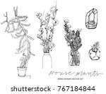 house plants hand drawn ink... | Shutterstock .eps vector #767184844