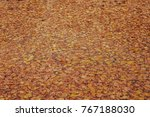 autumn background  leaves in... | Shutterstock . vector #767188030