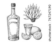 tequila bottle  blue agave and... | Shutterstock .eps vector #767247190