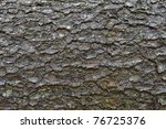Close Up Of An Pine Tree's Bark