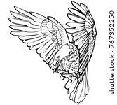 bald eagle attack swoop landing ... | Shutterstock .eps vector #767352250
