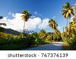 A Road Called Fig Tree Drive I...
