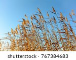 reeds lit by the sun  swinged...   Shutterstock . vector #767384683