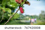 fresh mulberry  black ripe and... | Shutterstock . vector #767420008