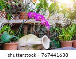 orchids flower in clay pots in  ... | Shutterstock . vector #767441638