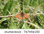 marsh fritillary butterfly | Shutterstock . vector #767446150