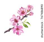 cherry blossom  sakura flowers... | Shutterstock . vector #767486890