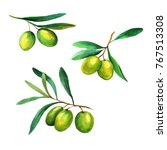 olives  watercolors on white... | Shutterstock . vector #767513308