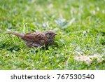 A Dunnock Prunella Modularis...