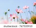 soft focus of pink cosmos... | Shutterstock . vector #767535910