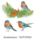 the birds are robins watercolor ... | Shutterstock . vector #767575924
