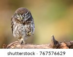 Stock photo little owl athene noctua is on the stone on a beautiful background 767576629