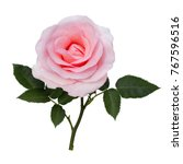 Stock photo pink rose isolated on a white background 767596516