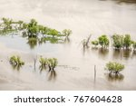 Small photo of Deciduous trees growing in the Upper Mississippi River near McGregor, Iowa, USA, on a spring morning, for concepts of adversity, survival, and the environment