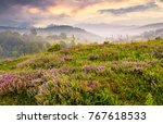 grassy hills with field of...   Shutterstock . vector #767618533