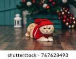Cute Ginger Cat In Red...