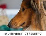 Portrait Profile Of Ginger...