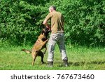 the dog is biting the ball. the ... | Shutterstock . vector #767673460