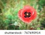 beautiful poppy flower close up | Shutterstock . vector #767690914