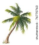vector illustration of the palm ...   Shutterstock .eps vector #76770763