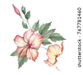 composition with hibiscus. hand ... | Shutterstock . vector #767781460
