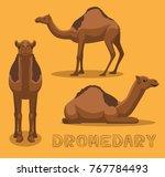 camel dromedary cartoon vector... | Shutterstock .eps vector #767784493