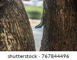 close up blue crested lizard... | Shutterstock . vector #767844496
