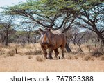 white rhinoceros in southern... | Shutterstock . vector #767853388