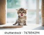 Stock photo cute persian kitten sitting on cat tower 767854294