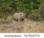 a black rhinoceros in southern... | Shutterstock . vector #767923774