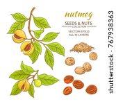 nutmeg branches vector set on... | Shutterstock .eps vector #767938363