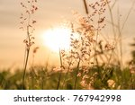 lanscape lake view in the... | Shutterstock . vector #767942998
