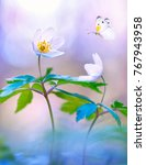 beautiful white butterfly and... | Shutterstock . vector #767943958