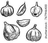 set of hand drawn garlic... | Shutterstock .eps vector #767946400
