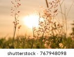 silhouette of grass and... | Shutterstock . vector #767948098
