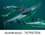 sandbar shark  carcharhinus... | Shutterstock . vector #767967556