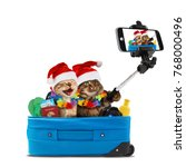 funny cats are taking a selfie... | Shutterstock . vector #768000496